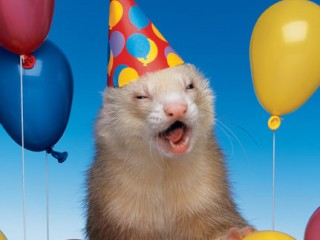 Funny-Animals-Party-Balloons-6-320x240.jpg