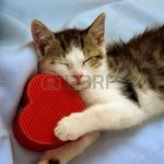 kitty heart.jpg