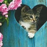 animals_other_a-tabby-kitten-in-a-heart-in-the-fence_71155.jpg