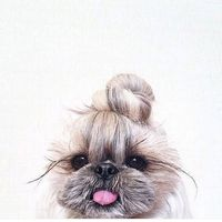 Verb Top Knot.jpg
