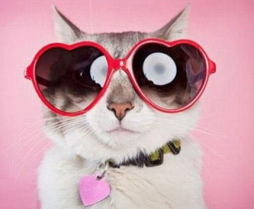 Top-10-Cats-Wearing-Heart-Shaped-Glasses-1.jpg