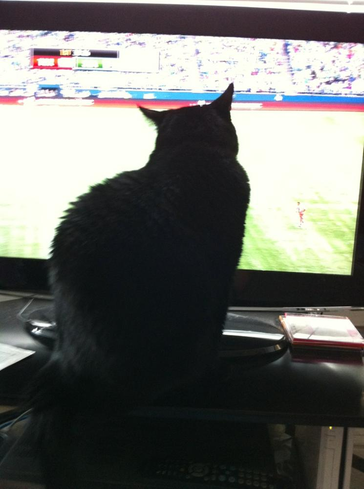 Niko REALLY into soccer.JPG