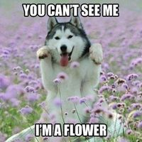 Can't see me I'm a flower.jpg
