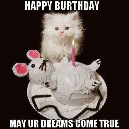 49-birthday-lolcats-funny-images-of-cats-with-cake.jpg
