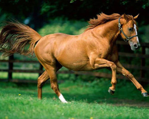 wallpapers-horses.jpg
