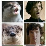 Otters-Who-Look-Like-Benedict-Cumberbatch1.jpg