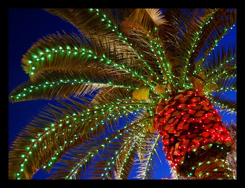 Christmas Lights Palm trees 5.jpg