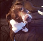 Screen Shot 2013-12-02 at 6.57.10 PM.png