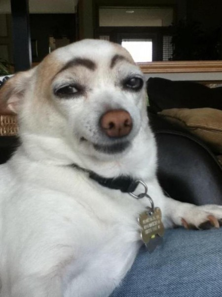 eyebrows-dog-e1339680838624.jpeg
