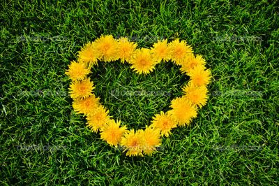 depositphotos_5997564-Dandelion-heart-on-a-grass.jpg