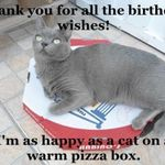 thank-you-for-all-the-birthday-wishes-im-as-happy-as-a-cat-on-a-warm-pizza-box.jpeg