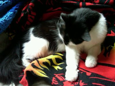 soft paws on his Star Wars blanket