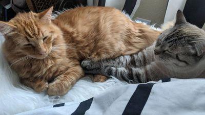 Fred and Apollo