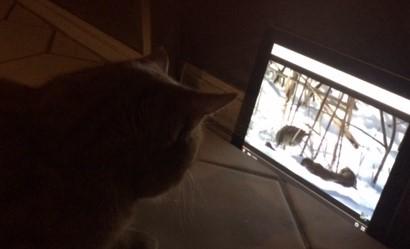 Cheddar watching video.jpg