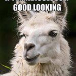 funny-looking-llamas1.jpg.pagespeed.ce.jA0gxOxQI9.jpg