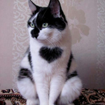 l-Love-the-Heart-on-this-cats-fur.-Beautiful..png