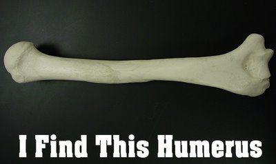 humerus-1.jpg