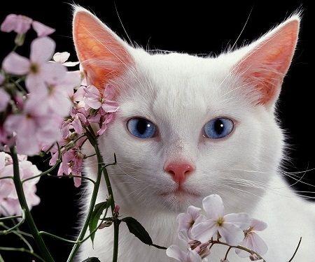 White cat Sephora.jpg