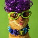 catwig6.jpg