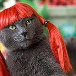catwig2.jpg