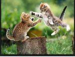 kitten pic.JPG