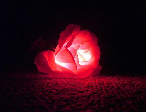 glowing rose.jpg