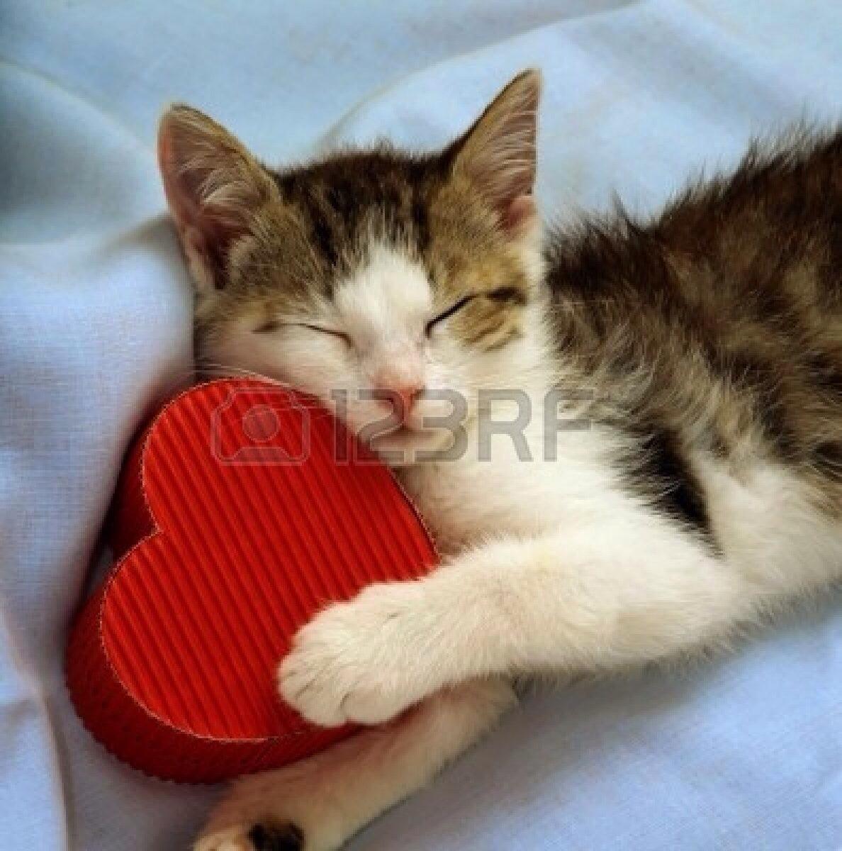 kitty heart.jpg