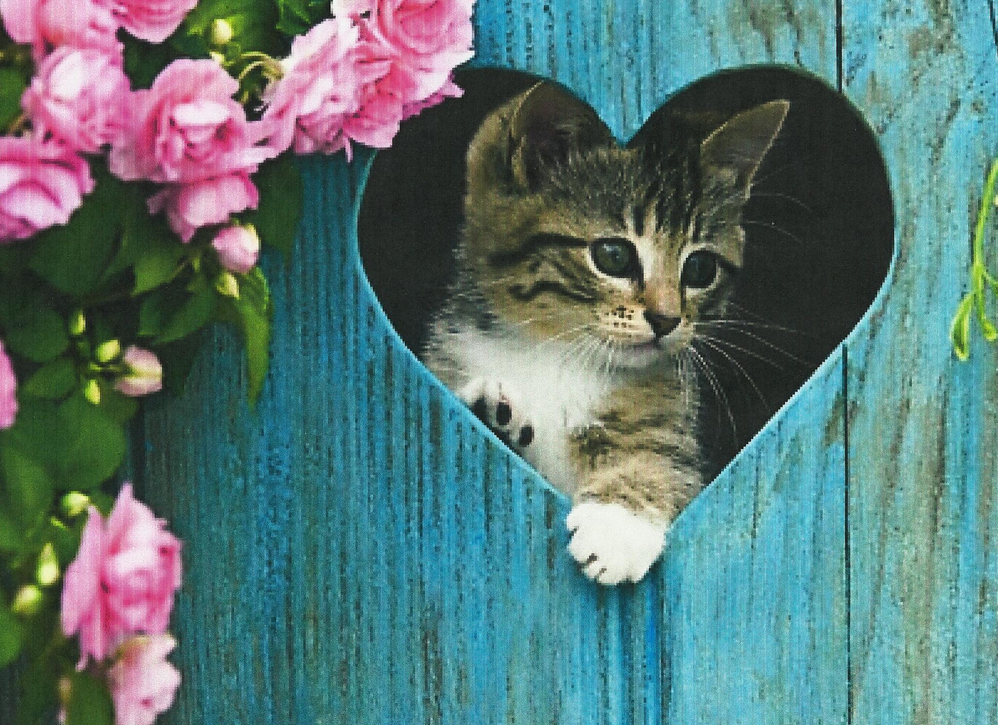 Картинки котят и сердца