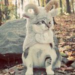 pet-costume-27.jpg