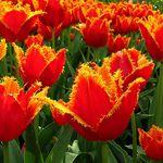 fireflowers.jpg