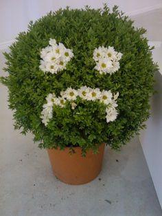 sad plant.jpg