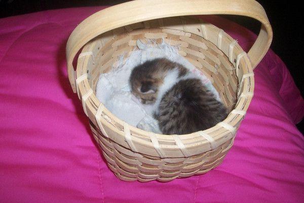 rolie in a basket.jpg