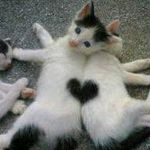 heartcats.jpeg