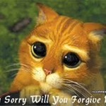 i-sorry-cat-random-22196648-249-202.jpg