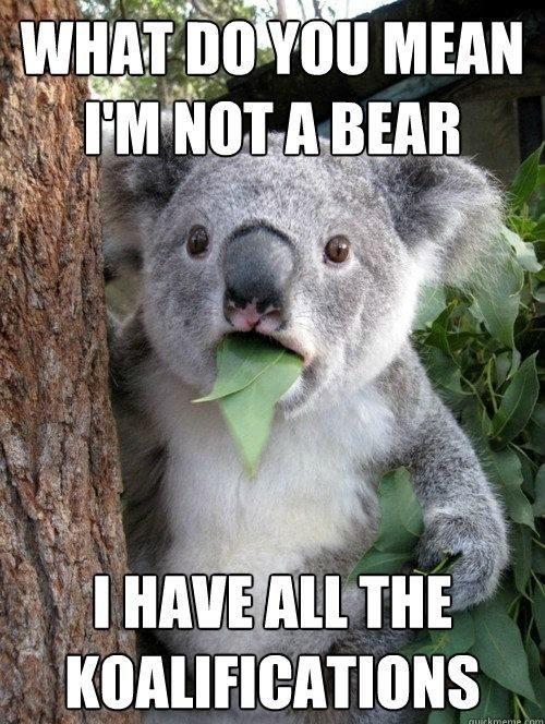 koala pix.jpg