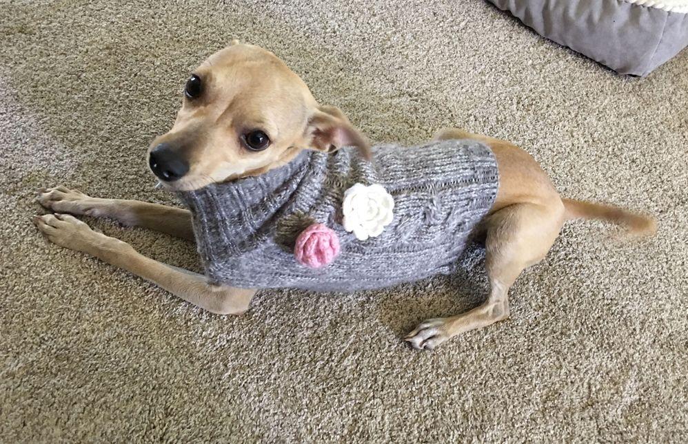 kiwsweater.jpg
