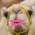 camel_eyelashes.jpg