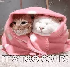 its too cold.jpg