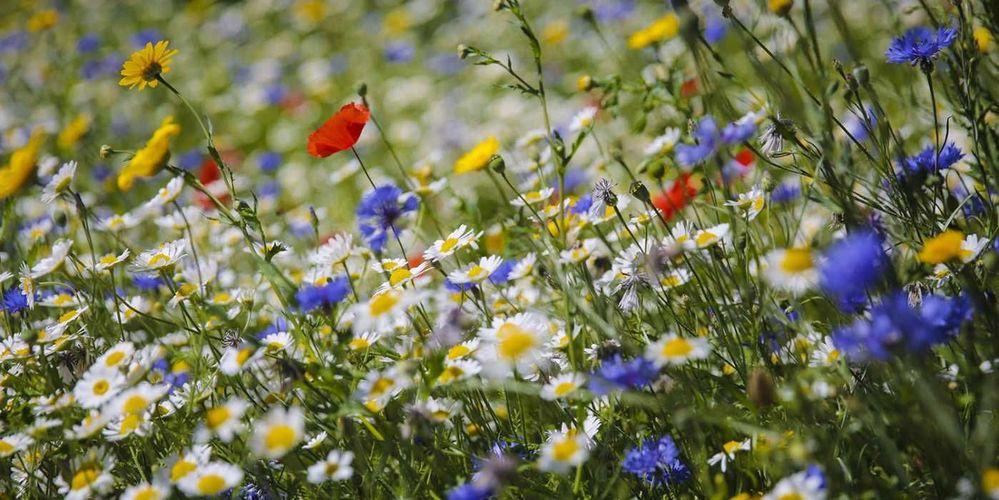 spring2020.jpg