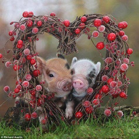 valentine-piggys