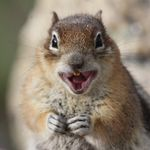 haha squirrel.jpg