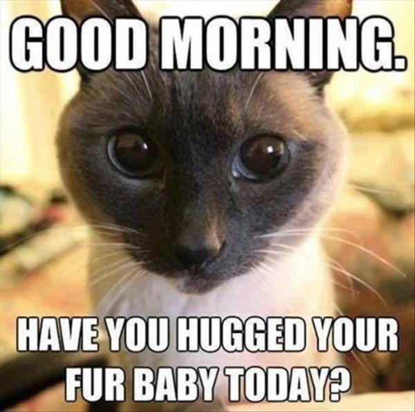 cat-humor-good-morning-hug-fur-baby.jpg