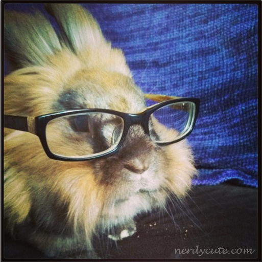nerdy-bunny.png