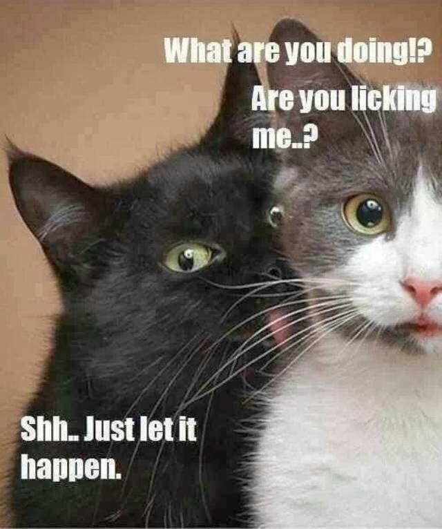 016-pictures-with-captions-are-you-licking-me-shh-just-let-it-happen-cats.jpg