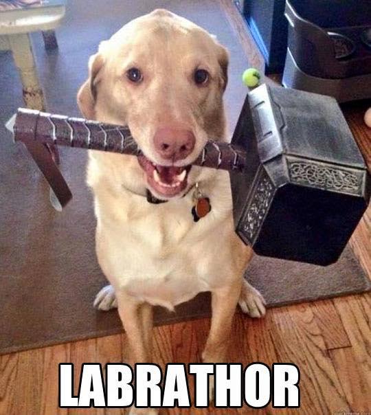 Labrathor-dog-meme.jpg