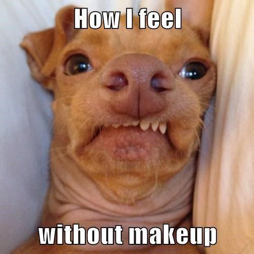 Ugly-Dog-Meme.jpg