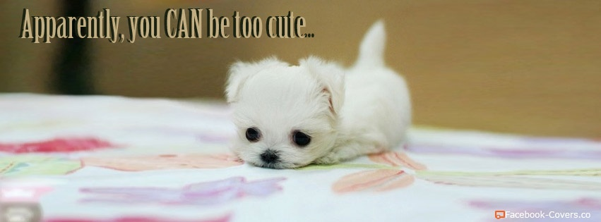 too-cute-puppy-t2.jpg