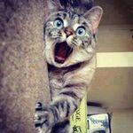 Surprised-cat-funny.jpg