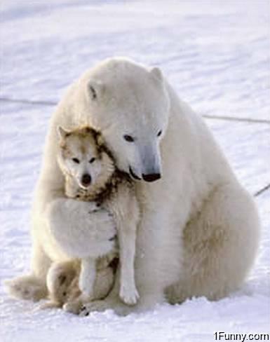 polar-bear-hugging-dog.jpg