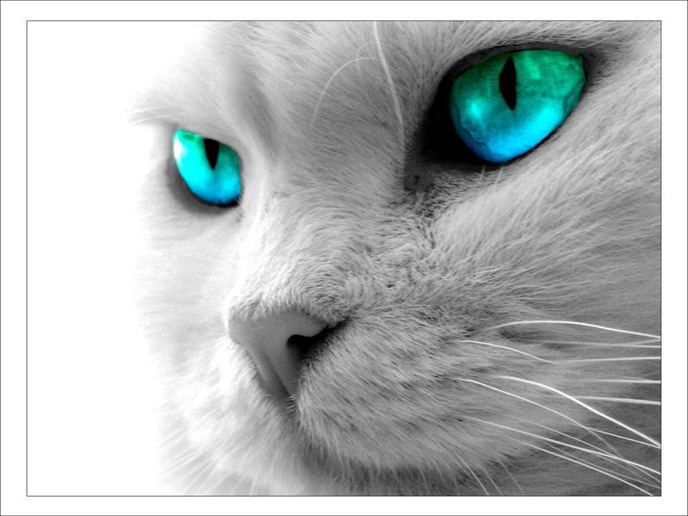 cat-blue-eyes.jpg